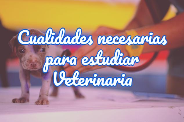 cualidades necesarias para estudiar veterinaria